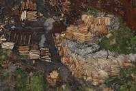Brazil losing forest the size of two football fields per minute