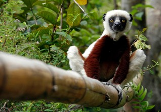 Madagascar guides fret about the future as loggers destroy forests
