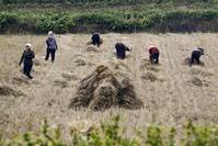 North Korea food production falls for first time since 2010
