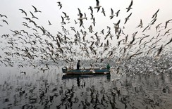 Men feed seagulls along the Yamuna river on a smoggy morning in New Delhi, India
