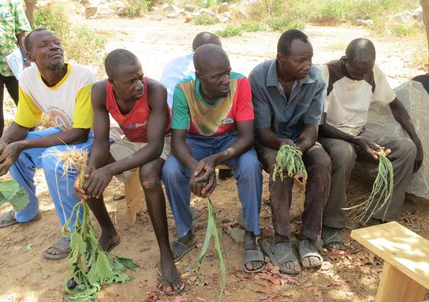 "Farmers, including Dieudonné Sedogo (far right), wait for ""plant doctors"" to examine their damaged crops in the village of Tamissi, Burkina Faso, on 1 April 2016. TRF/Zoe Tabary"