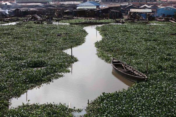 An abandoned canoe is seen on a water hyacinth covered lagoon near the Makoko slum in Nigeria's commercial capital Lagos on October 26, 2011. REUTERS/Akintunde Akinleye