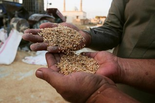 Syria gets 50,000 tonnes of Russian wheat in aid, none from commercial deals