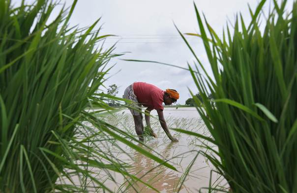 A farmer plants rice saplings in a paddy field against the backdrop of pre-monsoon clouds in the northern Indian city of Amritsar on June 13, 2013. REUTERS/Munish Sharma