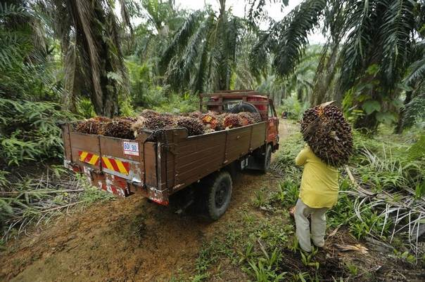A worker carries oil palm fruit at a local palm plantation in Shah Alam outside Kuala Lumpur, Malaysia, Nov. 21, 2013. REUTERS/Samsul Said