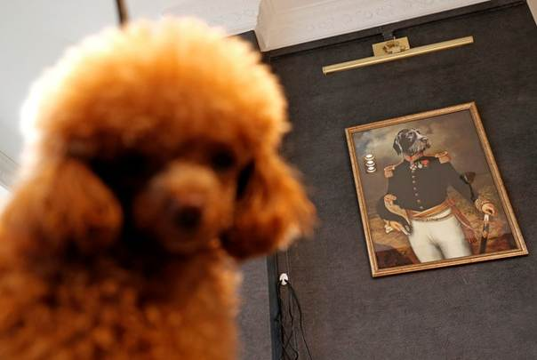 A Dog Sits In The Grooming Center Of The Wagington Luxury