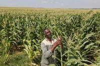 Zimbabwe to import 150,000 tonnes maize from South Africa