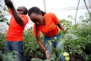 INTERVIEW-Future of African youth lies in agriculture, not Europe - food prize laureate