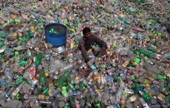 A man sorts bottles at a plastic junkyard on World Environment Day, in Chandigarh, India
