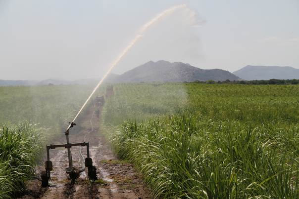 An irrigation system showers a sugarcane field with water at the Kuraz sugar project in southern Ethiopia. Photo: Ethiopian Sugar Corporation