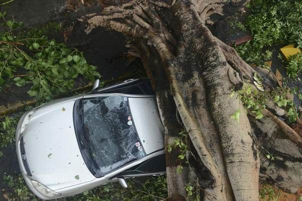 A worker uses an electric saw to remove a huge tree that fell on a car when Typhoon Rammasun hit Makati city in Manila, killing 10 people. Picture July 16, 2014, REUTERS/Mark DeMayo