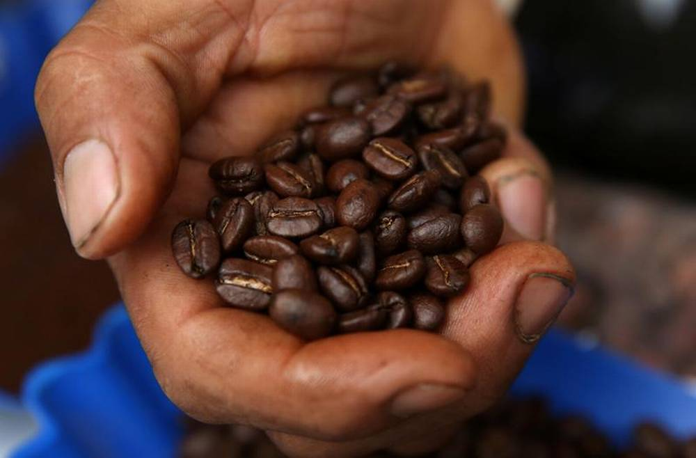 Landmark project to help Peru coffee farmers combat climate change