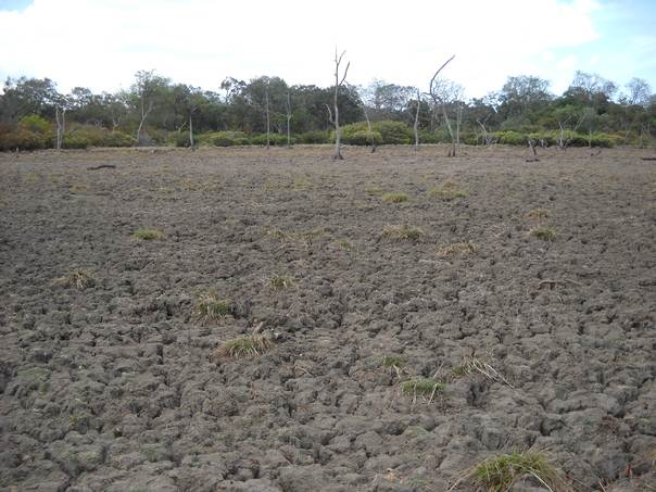 A view of a drought-hit field in Sri Lanka's Eastern Ampara District in August 2012. THOMSON REUTERS FOUNDATION/Amantha Perera