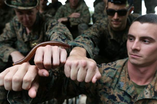 U S  Marines hold a millipede during a jungle survival exercise as