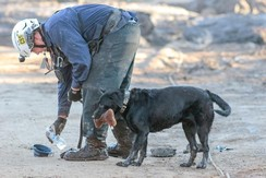 A search and rescue worker gives water to a search dog after a mudslide in Montecito, California, U.S.