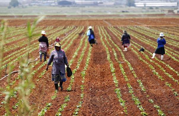Farm workers stand in a field at a farm in Klippoortie, east of Johannesburg, Nov. 21, 2012. REUTERS/Siphiwe Sibeko