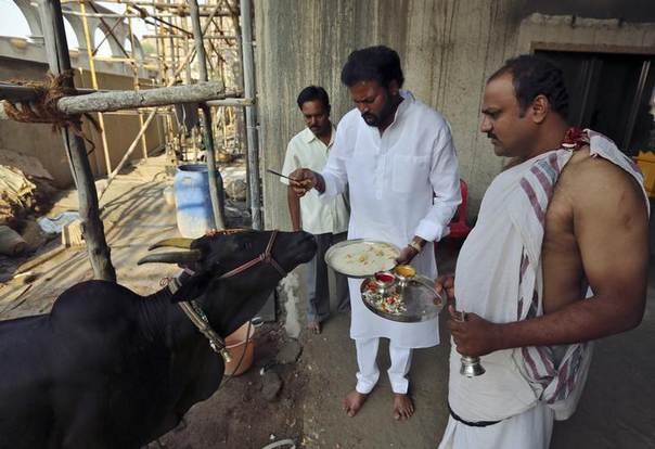 B. Sreeramulu (C), an election candidate of India's main opposition Bharatiya Janata Party (BJP), offers prayers in front of a cow at his residence in Bellary town in the southern Indian state of Karnataka April 16, 2014 REUTERS/Frank Jack Daniel