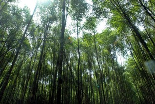 Forest monitoring gets a boost from Japanese space agency data
