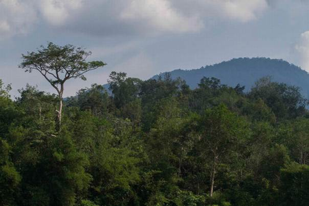 Challenging conventional wisdom, a PEN research team found that barely one out of 10 households ranks extracting natural forest or other non-cultivated resources as its first response to an emergency. Photo credit: CIFOR/Tri Saputro
