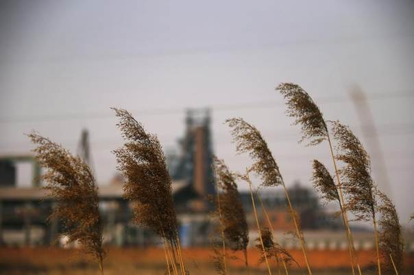Weeds are pictured near an abandoned steel mill of in Qianying township, Hebei province, Feb. 18, 2014. There are dozens of