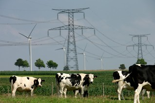 Green bonds set for shake up as EU agrees rules for sustainable financial products