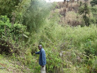 Pangas in hand, Kenya's indigenous fire scouts take on forest losses