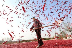 A farmer spreads red chili to dry at a village in Huaibei, Anhui province, China