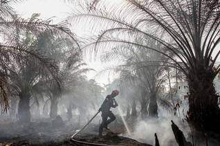Indonesia accused of putting profit ahead of the environment with new bill