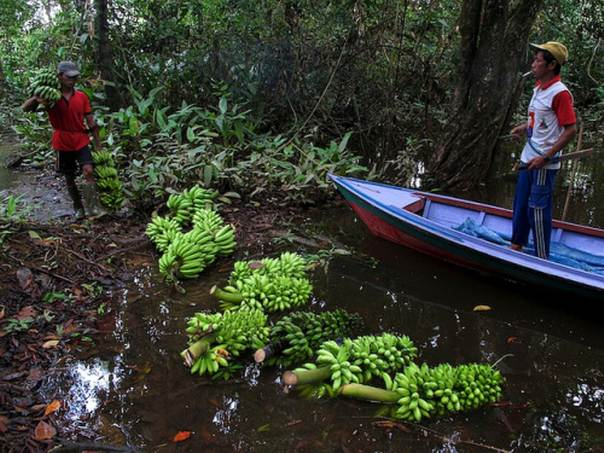 Promoting behavioral change to encourage the consumption of foods often considered inferior remains a big challenge, says Barbara Vinceti, a scientist with Biodiversity International. Photo credit: CIFOR/Yayan Indriatmoko