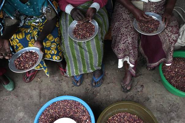 Women sort beans as they prepare for a meal in in Kasese, Uganda. May 8, 2013. REUTERS/James Akena.