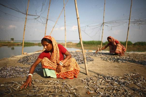 Heavy monsoon rains create large water bodies, which are an important resource for local fisher communities. Here Bangladeshi women are sorting and drying fish to later sell at the market. IFAD/GMB Akash