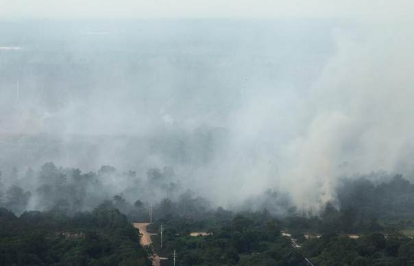 An aerial view of smoke rising from burnt trees during haze in Indonesia's Riau province, June 28, 2013. REUTERS/Beawiharta