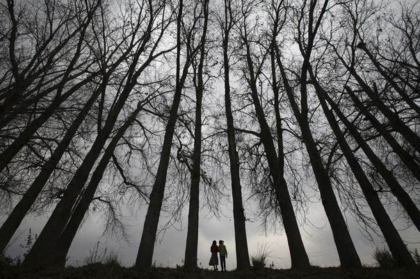 Girls walk beneath a row of trees on a winter day in the outskirts of Jammu February 12, 2012.