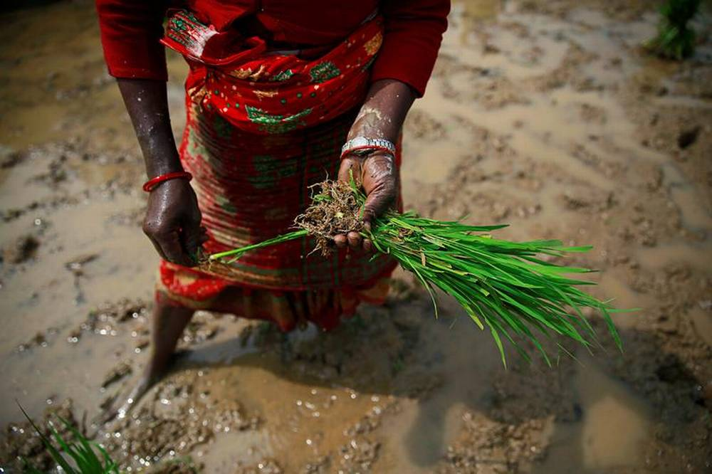 OPINION: Women and food security: the case for food system transformation