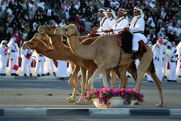 Members of the Qatari royal guards ride camels as they parade during