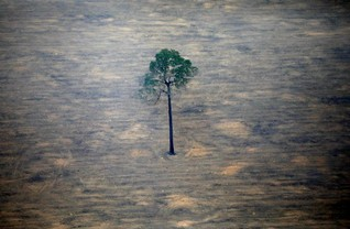 Brazil Amazon deforestation climbs more than 100% in November over same month last year -gov't agency