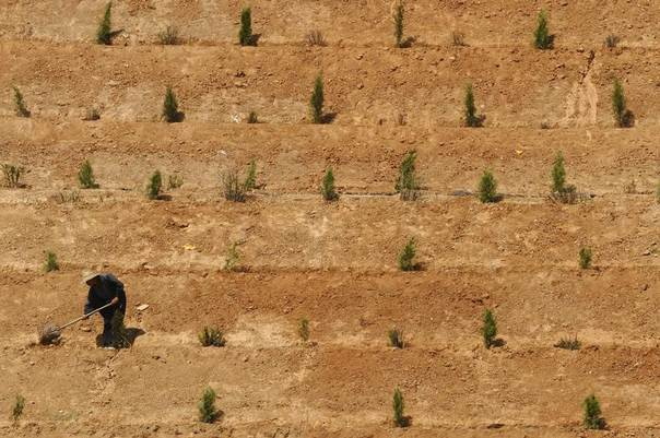 A worker plants a tree near a factory in Changzhi, Shanxi province, China, June 4, 2009. REUTERS/Stringer