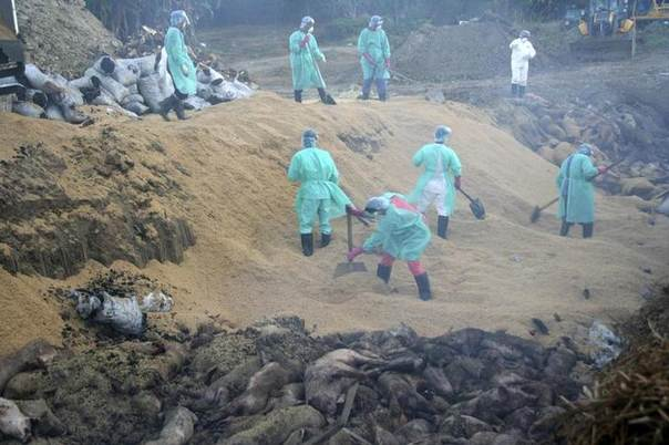 Health workers wearing protective gear use shovels to dump hundreds of culled pigs into a wide pit in an operation inside a hog farm in Pandi town, Bulacan province, north of Manila, Philippines, March 2, 2009. REUTERS/Ebola Reston Virus Task Force/Handout