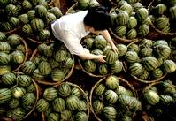 In China, food scares put Mao's self-sufficiency at risk