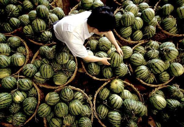 A Chinese fruit wholesaler arranges watermelons in his stall at a market in Shanghai municipality on May 13, 2005. REUTERS/China Newsphoto