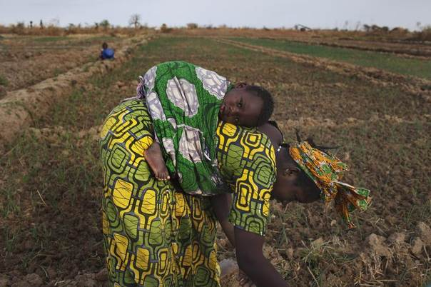 Farmer Bintou Samake plants beans while carrying her son Mahamadou on her back on a farm in Heremakono, Mali, January 22, 2013. REUTERS/Joe Penney