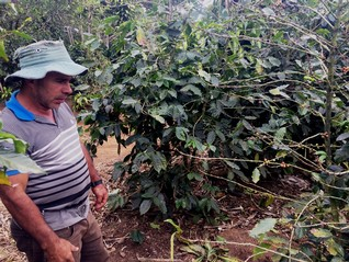 Costa Rica struggles to sell insurance to climate-threatened farmers