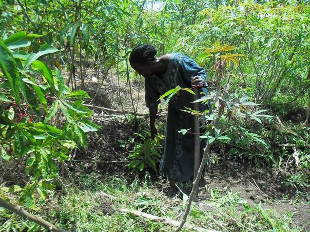 Julienne Malemuka, wife of the traditional chief of Mbanza Boma village, works in her fields in DRC's Bas-Congo province. TRF/Nene Mainzana Mapoko