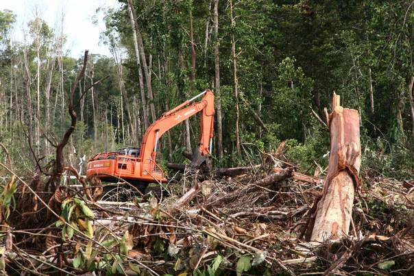 An excavator is seen in a destroyed forest at a peatland area in Kuala Tripa district in Indonesia's Aceh province on December 20, 2011. REUTERS/Roni Bintang