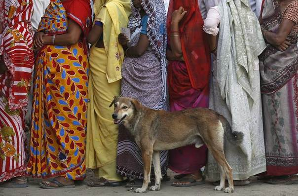 Women line up beside a stray dog to cast their vote outside a polling station in Vrindavan in the northern Indian state of Uttar Pradesh April 24, 2014. REUTERS/Ahmad Masood