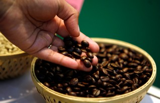 Indigenous Indians fight deforestation threat with gourmet coffee