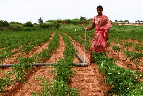 A woman farmer with an irrigation sprinkler in Poovula Doruvu village in Andhra Pradesh state, southern India. TRF/Stella Paul