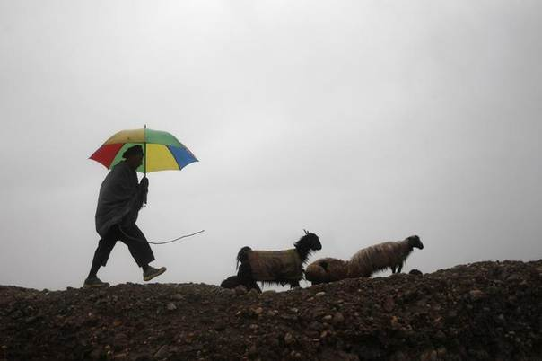An Afghan shepherd guides his herd of sheep on a rainy day in Jalalabad Province March 24, 2014. REUTERS/Parwiz