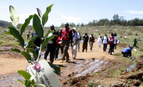 Environmentalists arrive for a tree planting session at the Kaptunga station of the Mau Forest Complex in Kenya's Rift Valley, Jan. 15, 2010. REUTERS/Noor Khamis