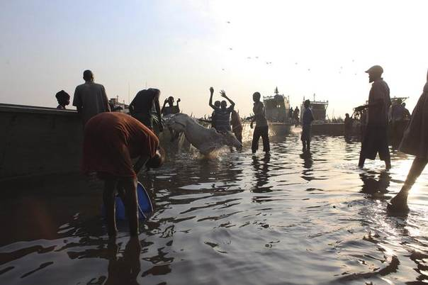 Men displaced by the fighting in Bor county, who have just arrived, unload cattle out of the boat as a girl washes a bucket in the port in Minkaman, in Awerial county, Lakes state, in South Sudan, January 15, 2014. REUTERS/Andreea Campeanu